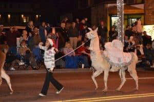 Girl walking llama in Christmas Parade in Gatlinburg Tn