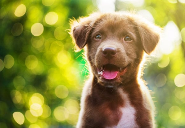 smiling puppy outside